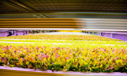 Kuwait's vertical farm using &ever Cloud, SAP Business Technology to localise herbs